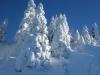 Snowy trees in Crozet